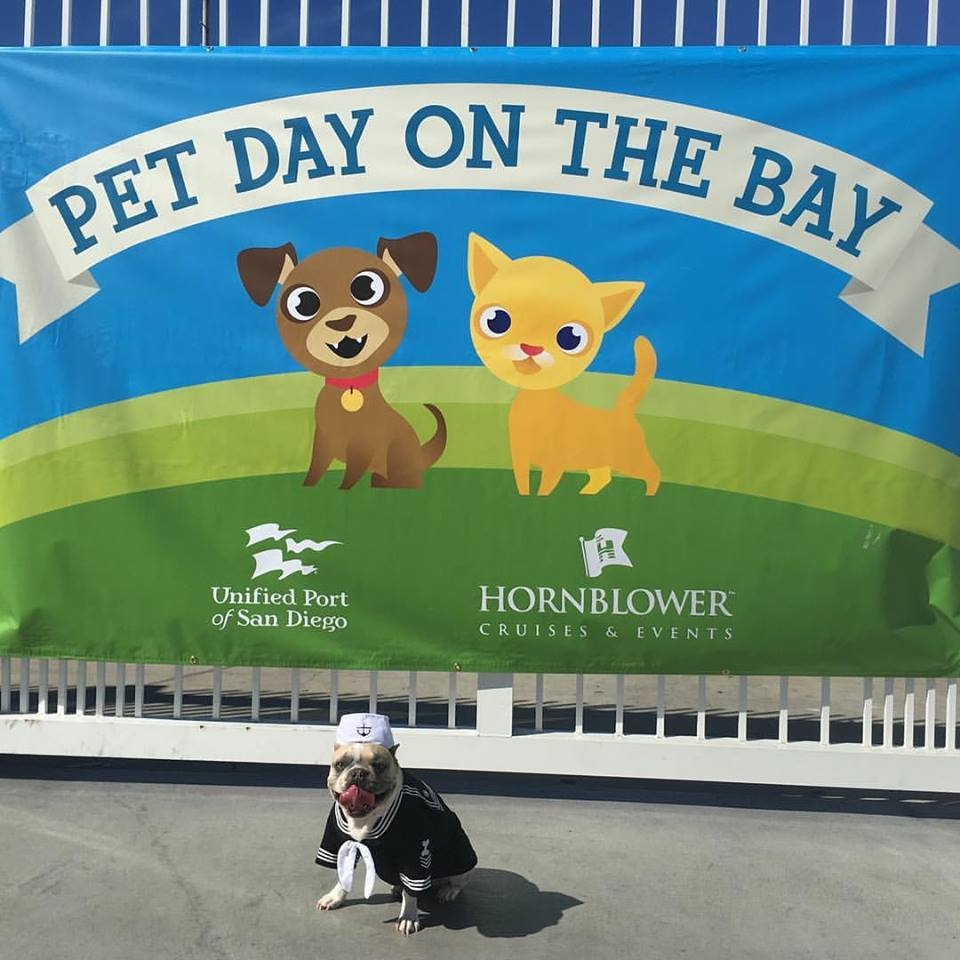 hornblowers pet day