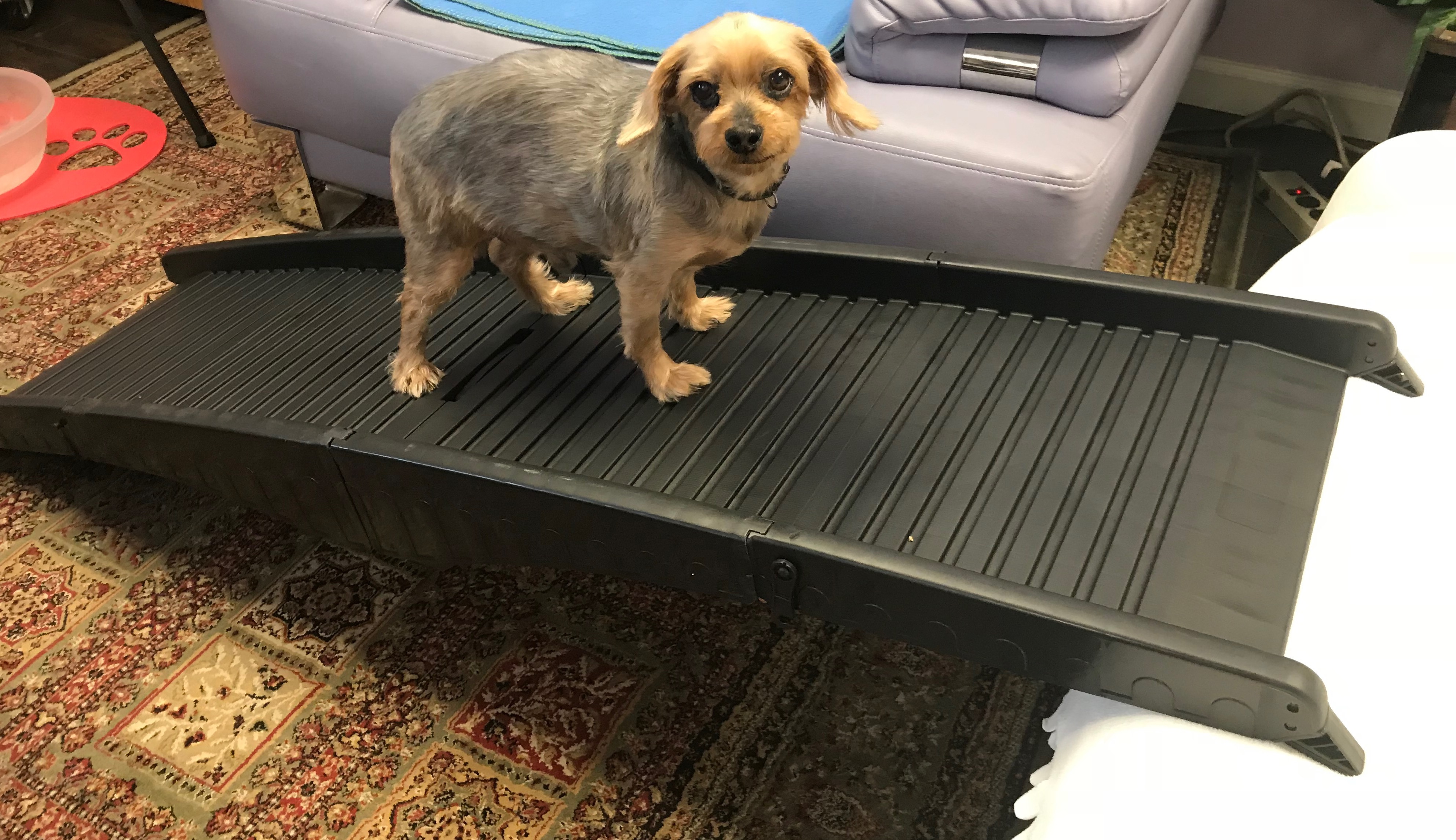 dog ramp, bed bath and beyond