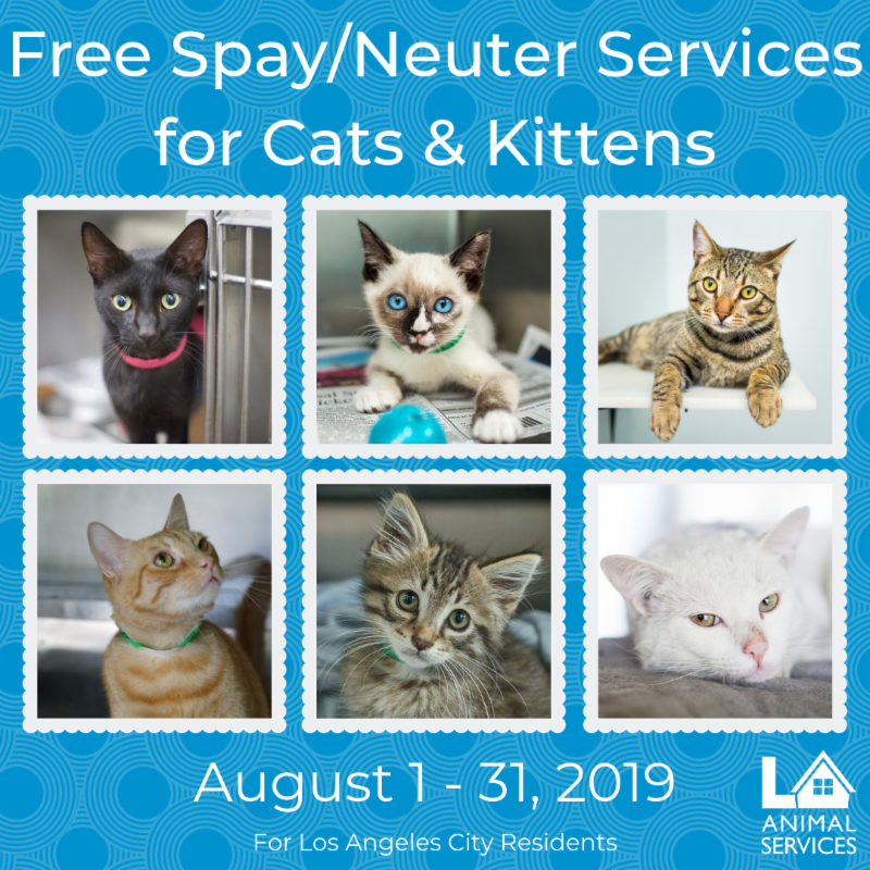 free spay and neuter los angeles, la animal services