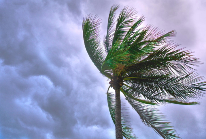 eei hurricane safety tips, laura and marco storm