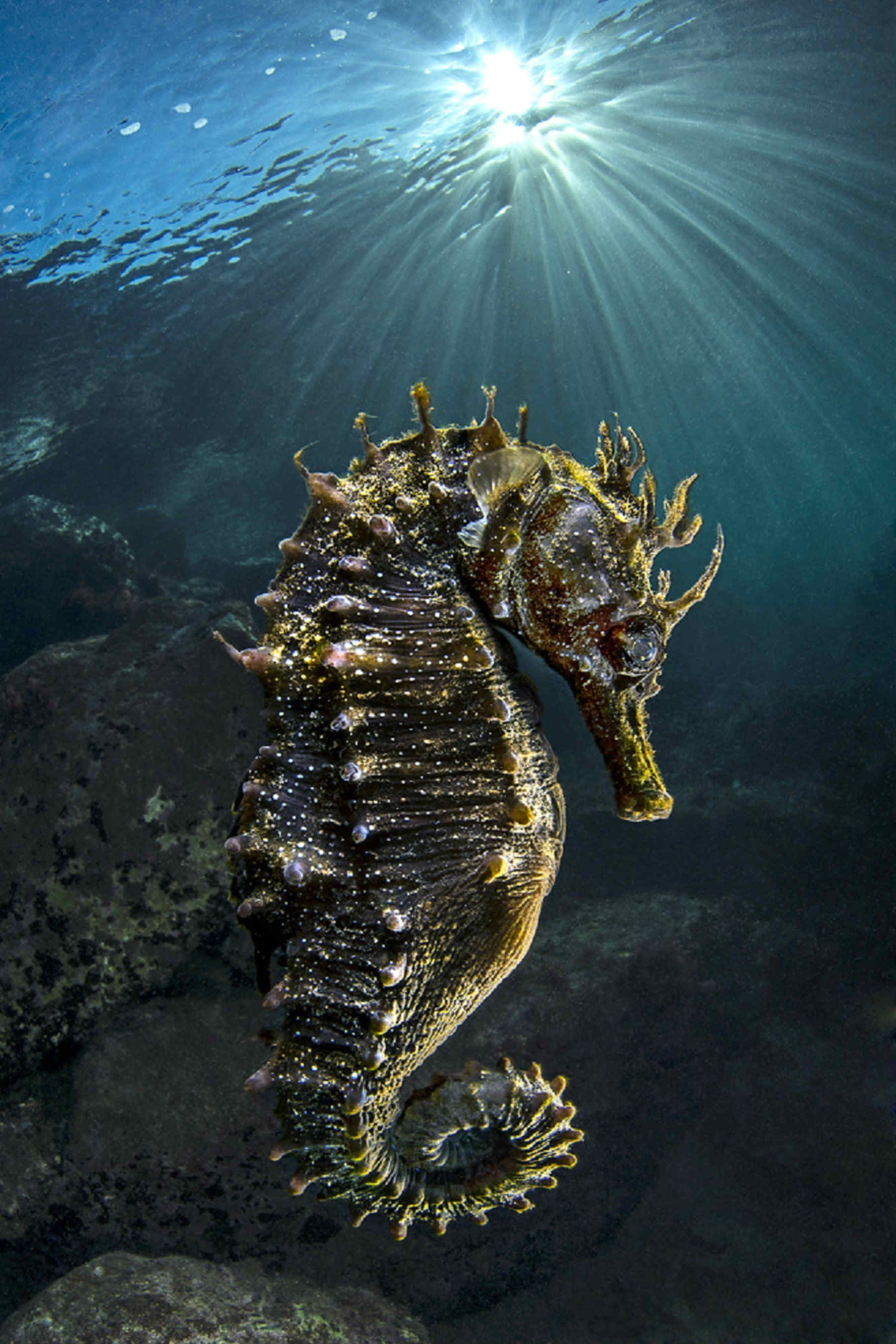 Epson Sponsors Nature's Best Photography Exhibition