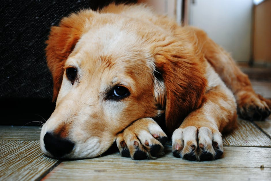 how to get gum out of your dog s paw latf usa