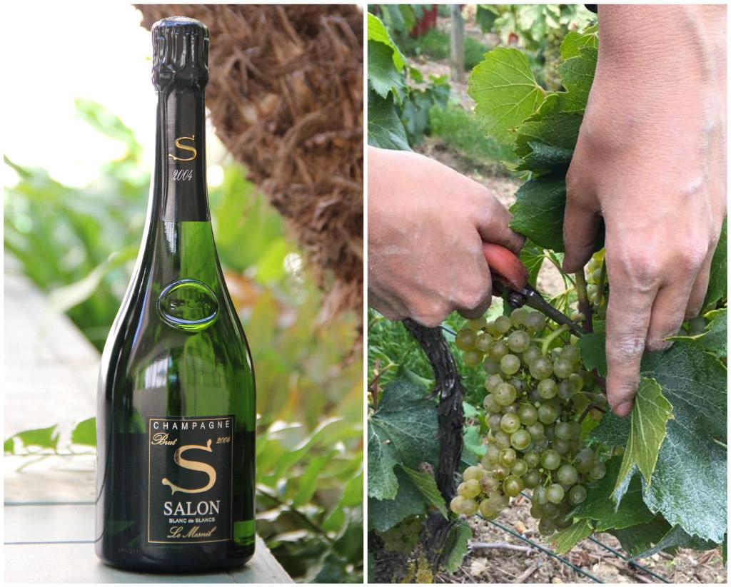 Champagne Salon\'s Blanc de Blancs Brut 2004 Is Exquisite ...
