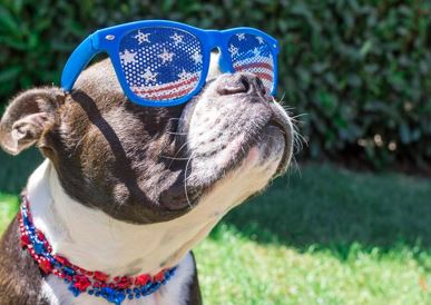 fourth of july, 4th of july, pets, safety, dogs, cats